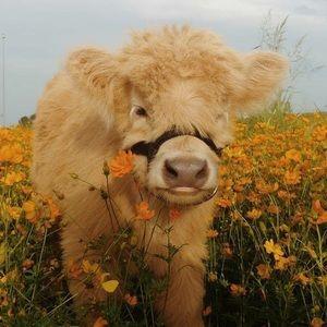 Farm Life Style Inspo